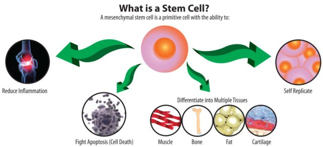 Stem Cells Therapy and Treatment in Ukraine - Medinconsult.com